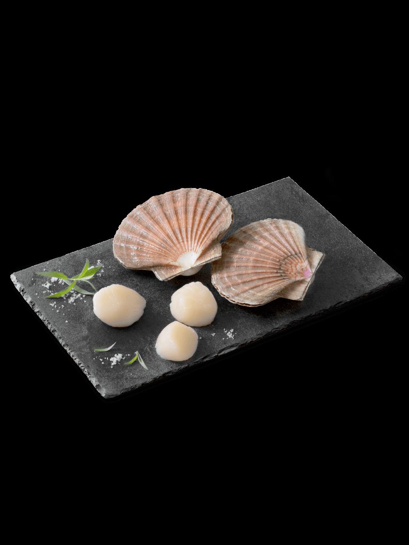 Jakobsmuscheln mit ihren hübschen Muschelschalen, Kräutern und Salz auf einer edlen schwarzen Steinplatte