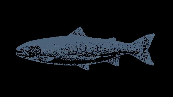 Fisch und mehr | NORDSEE